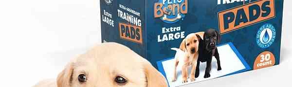 Free Sample of PooPee Dog Pads